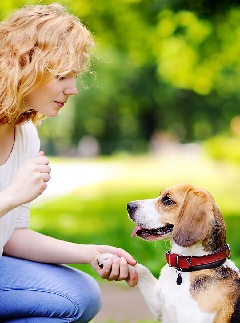 WHAT-IS-THE-DIFFERENCE-BETWEEN-A-SERVICE-DOG-AND-AN-EMOTIONAL-SUPPORT-ANIMAL